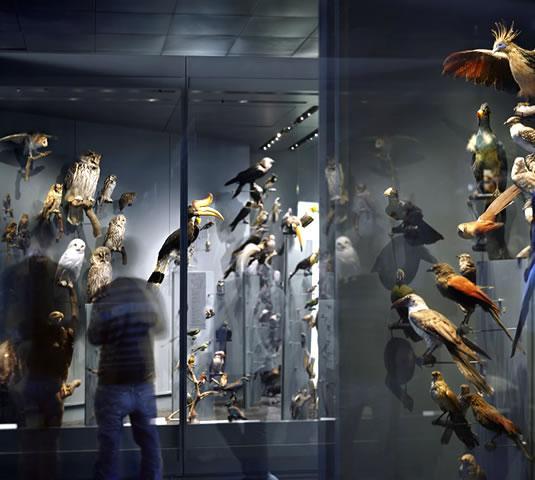 Muséum de Toulouse